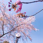 桜の花のおまじない