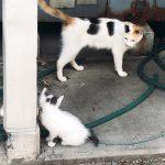 千葉の漁港で会った猫たち